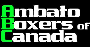 Ambato Boxers